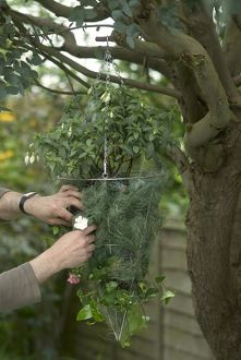 Human hands adding plants to metal basket hanged on tree branch