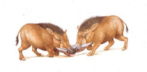 Illustration of two Archaeotherium mammals on white background