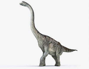 Illustration of Brachiosaurus showing characteristic long neck