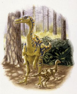 Illustration of Dromiceiomimus with young