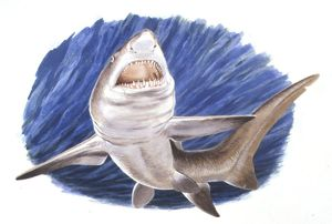 Illustration representing Carcharodon megalodon swimming