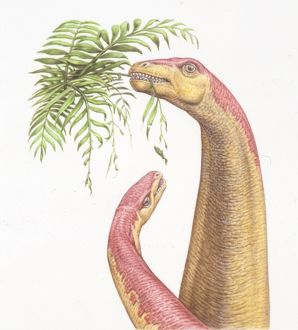 Illustration representing Kotasaurus and young eating leaves of tree