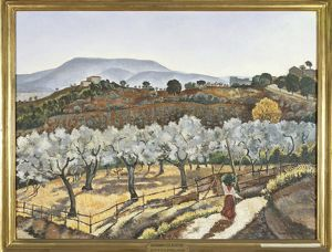 Italy, Florence, Olive grove outside the walls of Anagni, 1927
