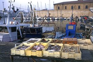Italy, Marche, Ancona, crates of fresh seafood at harbour, close-up