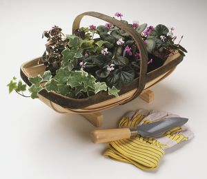 Ivy and Cyclamen in a trug, gardening gloves and a trowel