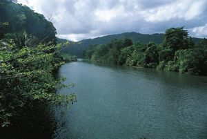 Jamaica, The Rio Blanco and tropical forest