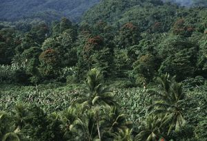 Jamaica, tropical forest in Rio Blanco valley
