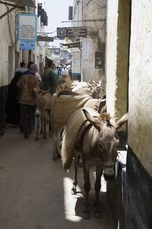 animals/outdoors/kenya lamu island donkeys people narrow street