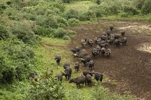 animals/outdoors/kenya mount kenya national park herd african