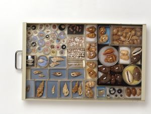 Large collection of shells in drawer