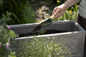 Man's hand filling window box with compost