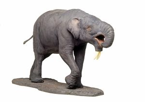 Model of Deinotherium, a pre-historic proboscid