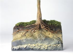 Model of a tree's roots