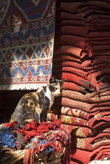 animals/outdoors/morocco marrakech medina souk des tapis cat