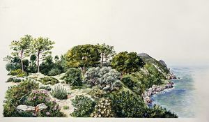 Natural Environments, Maquis shrubland, illustration