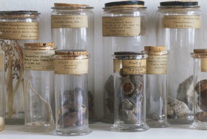Old botanical specimen jars filled with nature finds, front view