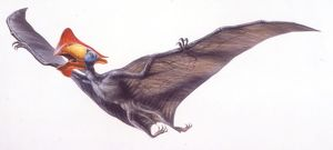 Palaeozoology, Cretaceous period, Pterosaurs, Tapejara, illustration by Robin Boutell