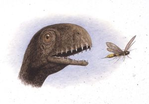 Palaeozoology, Jurassic period, Dinosaurs, Anurognathus preys on insect, illustration