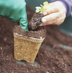 Person holding seedling above rectangular pot in one hand and making hole in substrate