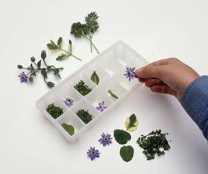Person placing borage flowers and other herbs in ice cube tray