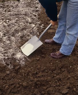 Person spreading lime over surface of soil with spade