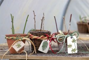 Plant cuttings planted in ceramic and wicker pots