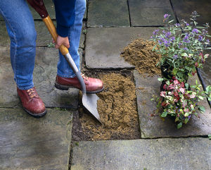 Planting in a patio, preparing the soil