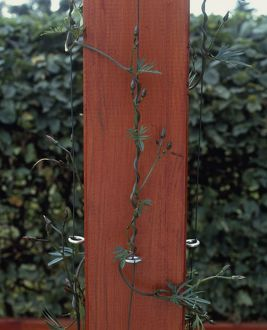 Detail of pole from pergola with stabilising wire for climbing plants to latch onto