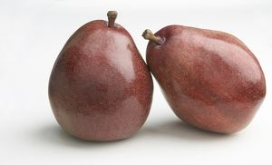Two Red Sensation pears, close-up