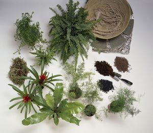 A selection of ferns, bromeliads, moss, potting clay and pellets, for arranging in