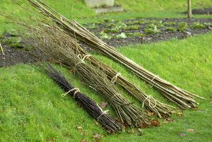 Selection of hazel rods and willow