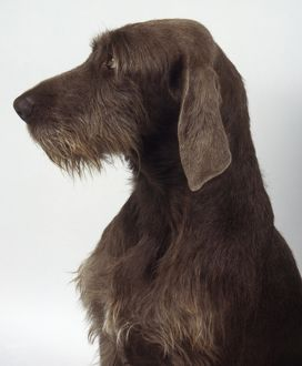 <b>Slovakian Rough Haired Pointer</b><br>Selection of 4 items