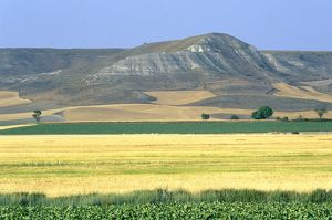 Spain, Castilla y Leon, Palencia Province, Tierra de Campos, fields backed by hills