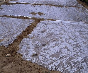 Sterilized soil covered with plastic sheeting