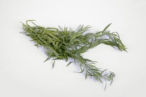 Tarragon on white background, close-up