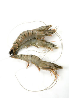 Tiger prawns on white background, close-up
