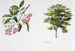 Tree, illustration