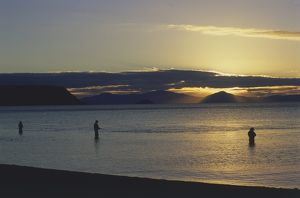 travel/trout fishing sunset mouth waitahanui river north