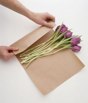 Tulips being wrapped in brown paper before being placed in conditioning solution