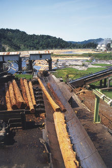 USA, California, stacked redwood lumber being moved onto conveyor belt in outdoor