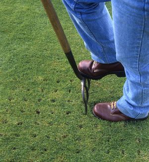 Using a garden fork to aerate grass, close-up
