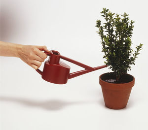 Using a watering can to water a potted plant