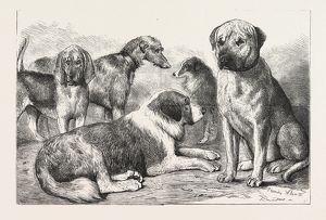 WINNERS AT THE DOG SHOW OF THE KENNEL CLUB, AT THE CRYSTAL PALACE, LONDON, Mr. E