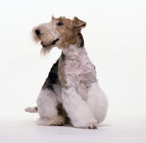 <b>Fox Terrier (Wire)</b><br>Selection of 149 items