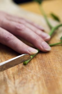 Woman using penknife to make cut in stem of tomato plant shoot on wooden table