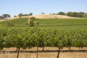Agricultural fields, Clare Valley, South Australia