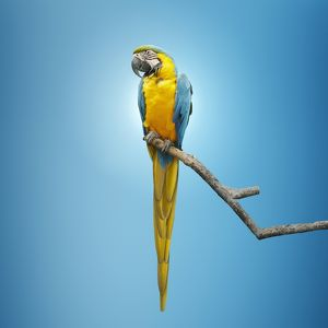Close up of macaw perching on tree branch