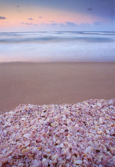 Australia, South Australia, Coorong National Park, shells on beach