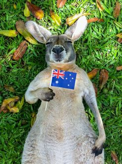 <b>Australia Day</b><br>Selection of 30 items