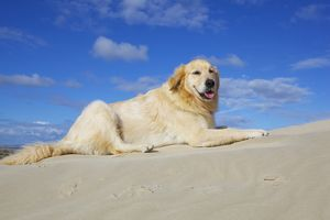 Dog sitting in sand